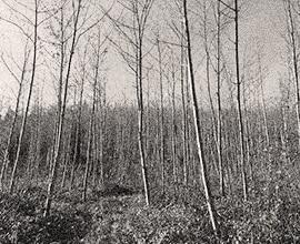 1934Primeras actividades forestales y comerciales