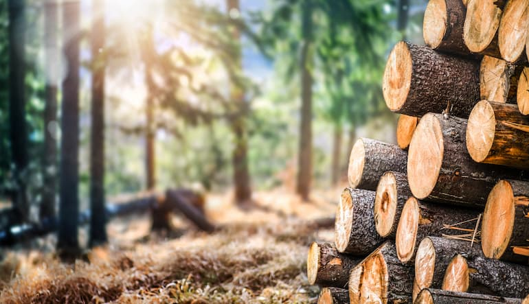 fabricación de madera